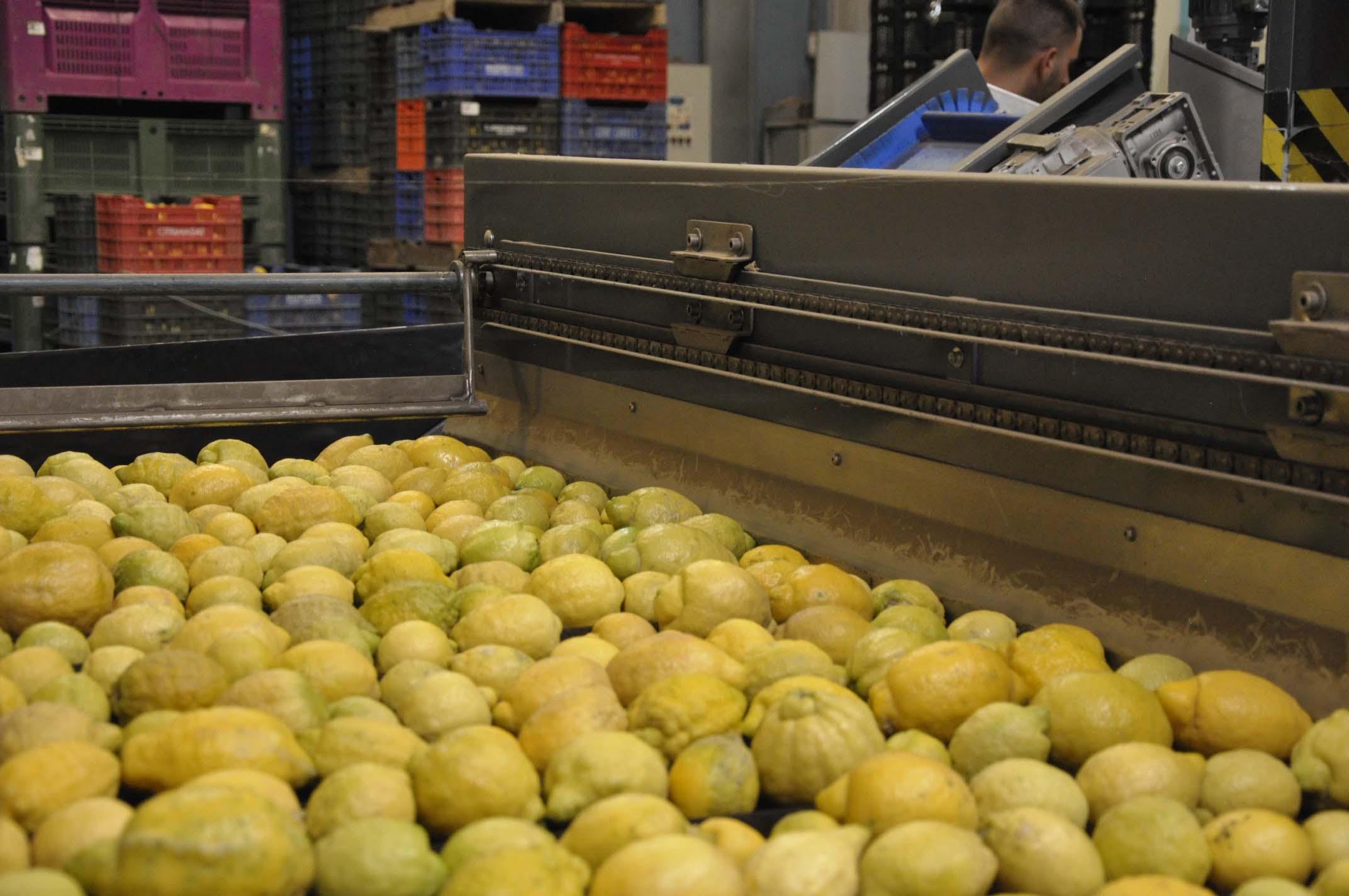 citricos-de-alhaurin